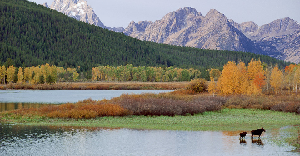 Moose & The Teton Range, Grand Teton National Park, Wyoming, USA