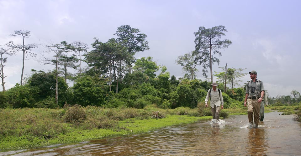 Odzala-Kokoua National Park, Republic of the Congo