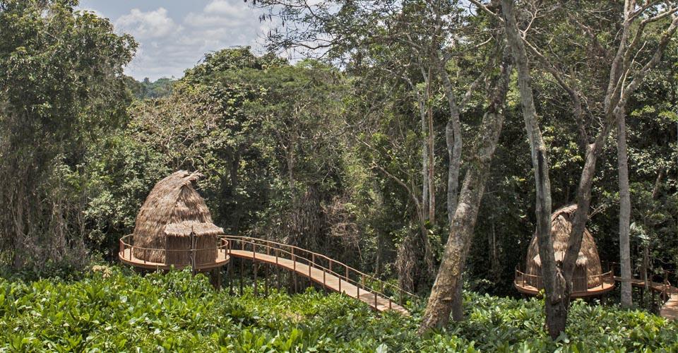 Ngaga Camp, Ndzehi Forest, Congo
