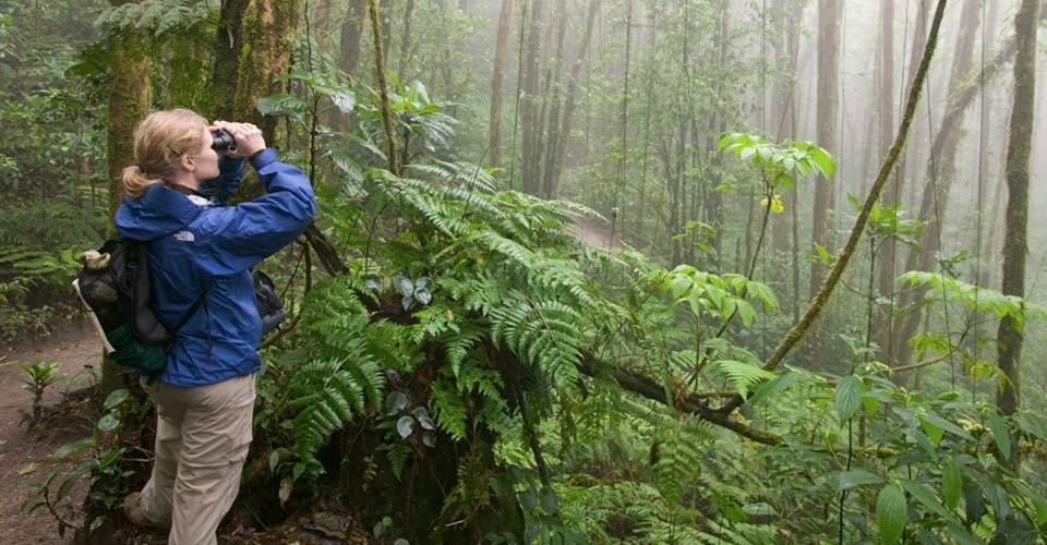 Bird watching, Monteverde, Costa Rica