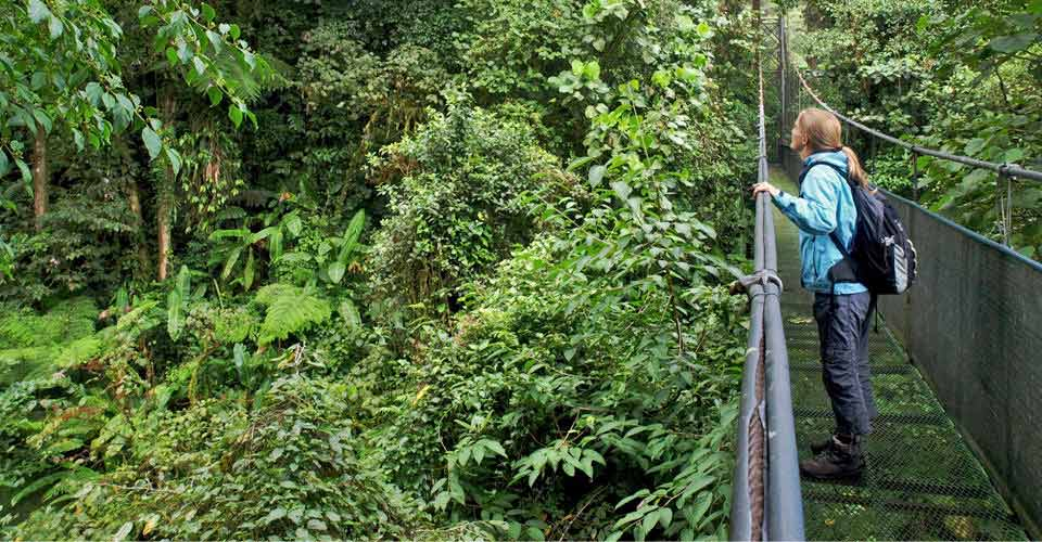 Hanging bridges, Monteverde, Costa Rica