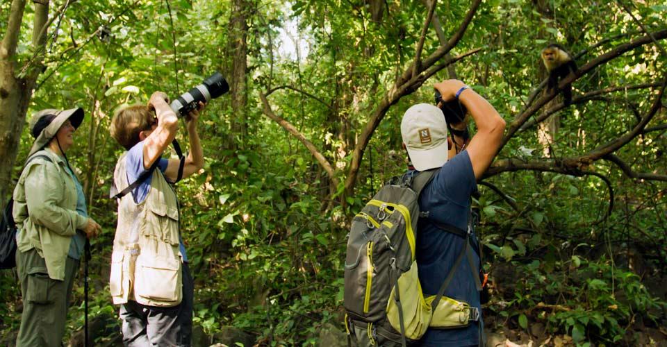 White-faced monkeys, Ometepe Island, Nicaragua