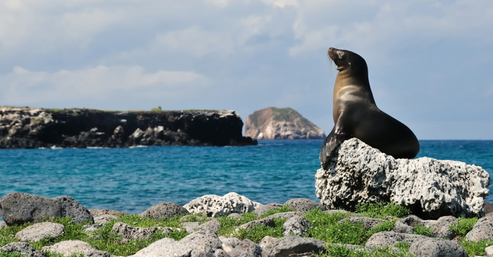 Sea lion, South Plaza Island, Galapagos, Ecuador