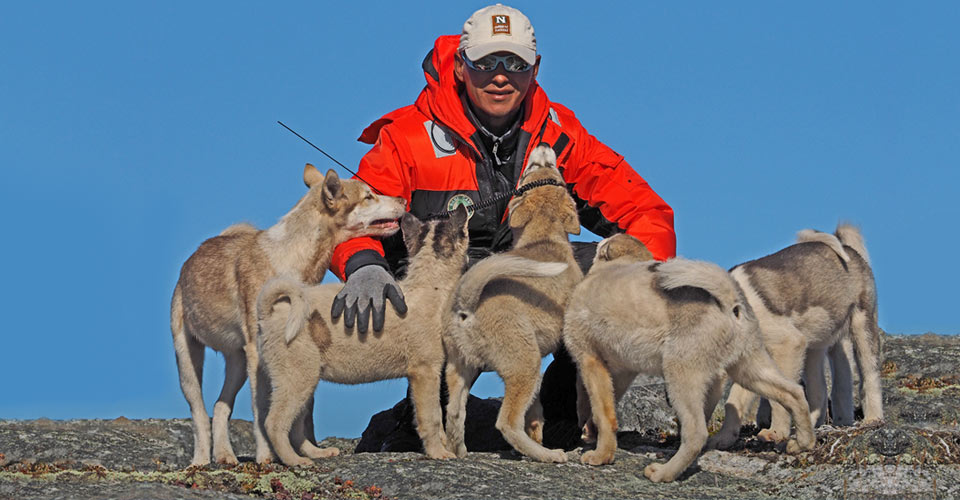 Sled dogs, Tinit, Greenland