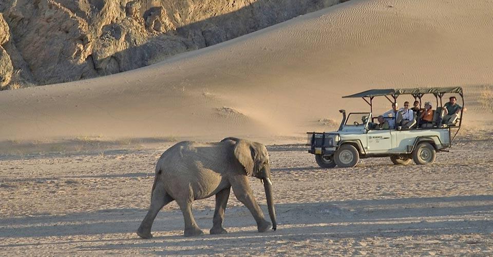 African elephant, Damaraland, Namibia