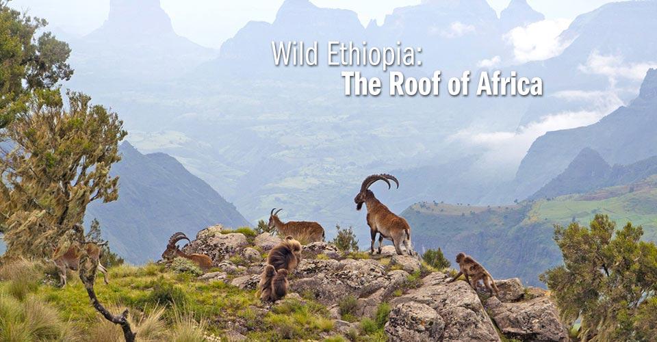 Ethiopia ...