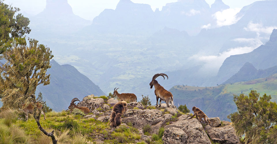 Wild Ethiopia: The Roof of Africa