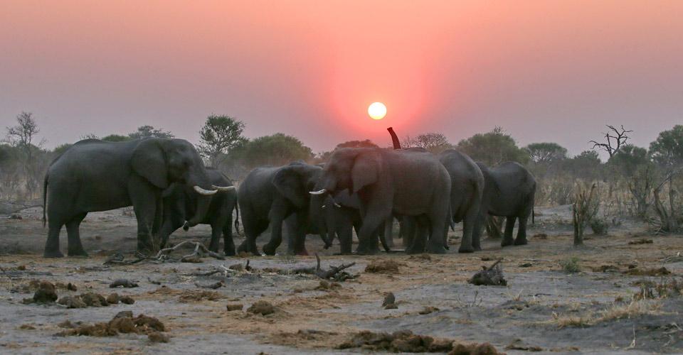Elephant, Khwai Private Reserve, Botswana