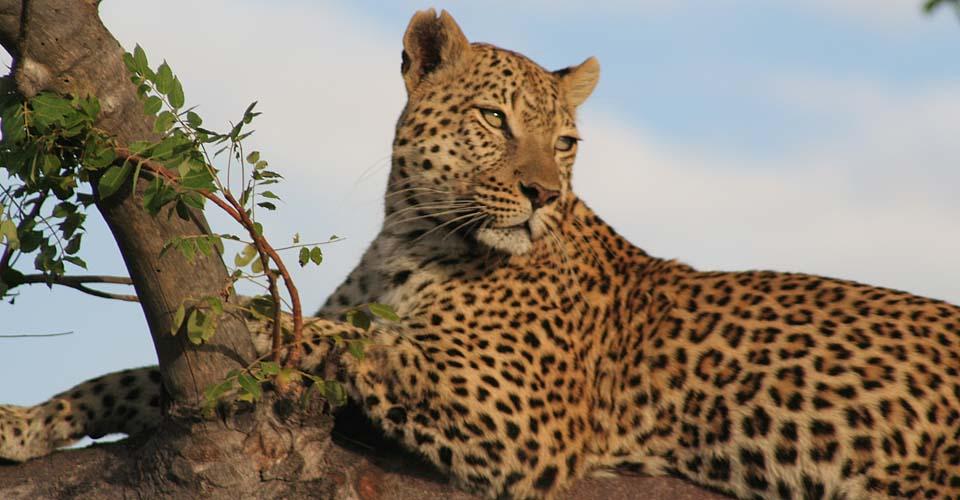Family Africa Safari