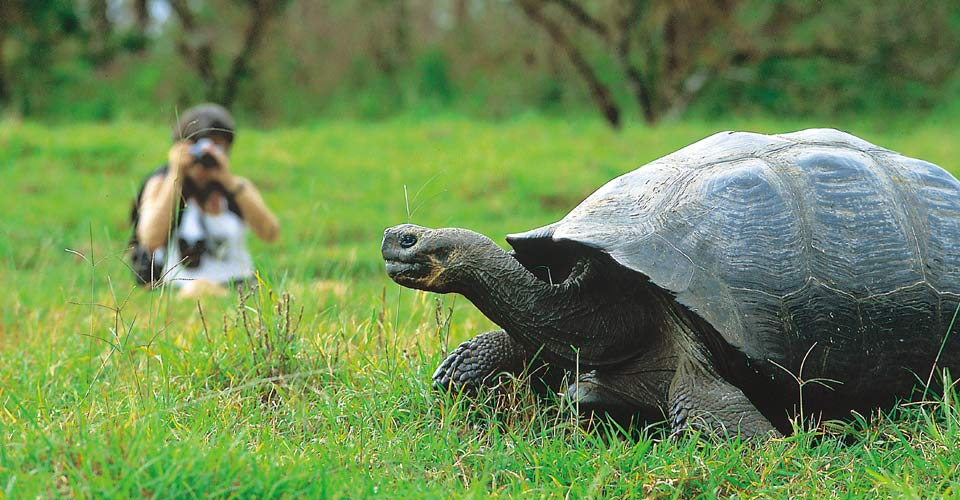 Tortoise, Santa Cruz, Galapagos Islands