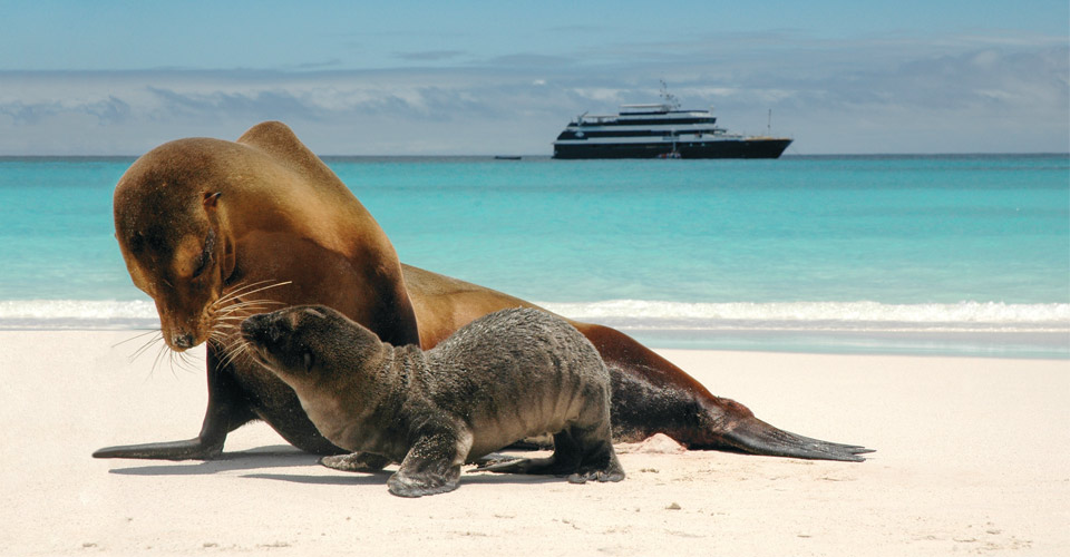 Sea lion and pup, Galapagos Islands