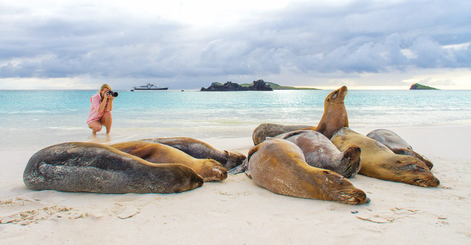 Sea lions, Santiago Island, Galapagos Islands