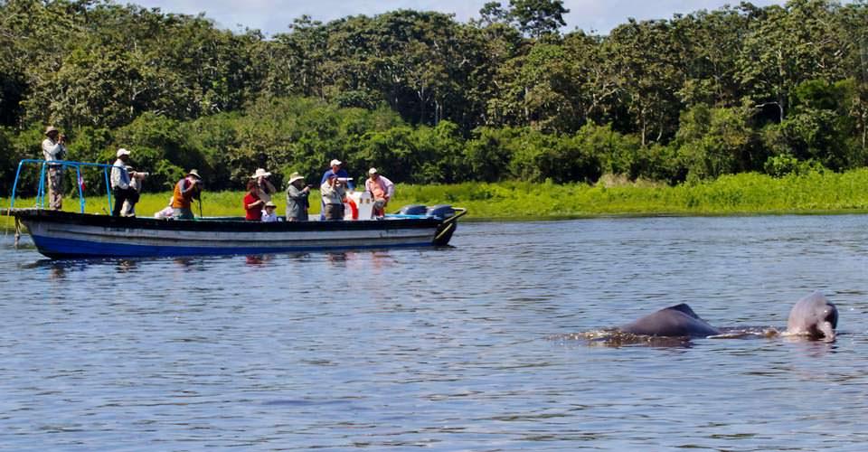 Gray river dolphins, Pacaya Samiria National Reserve, Peru