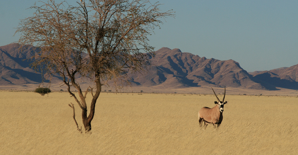 The Great Namibia Wildlife Safari