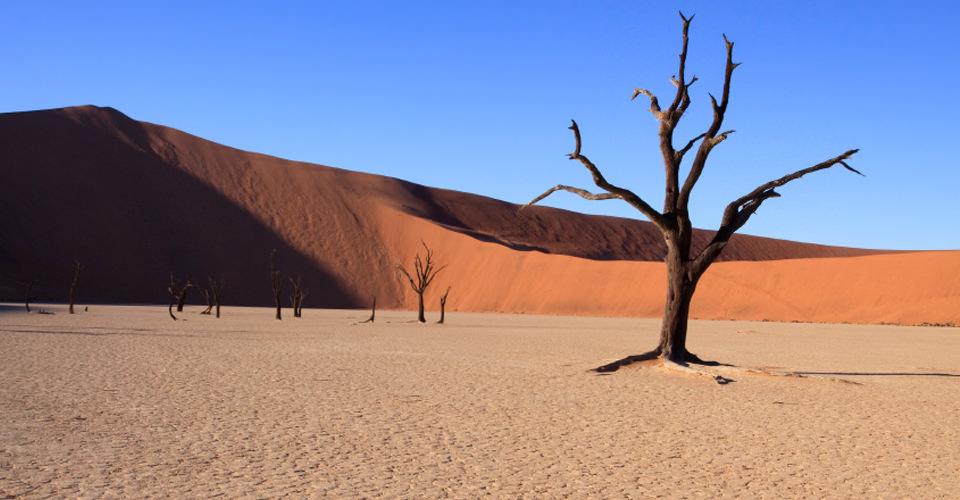 Dead Vlei, Sossusvlei, Namib-Naukluft National Park, Namibia