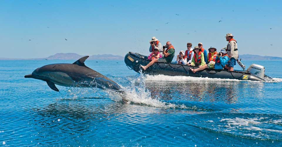 Dolphins, Baja California, Mexico