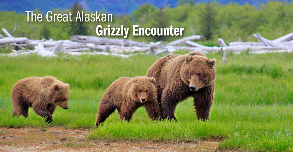 7-Nights The Great Alaskan Grizzly Encounter