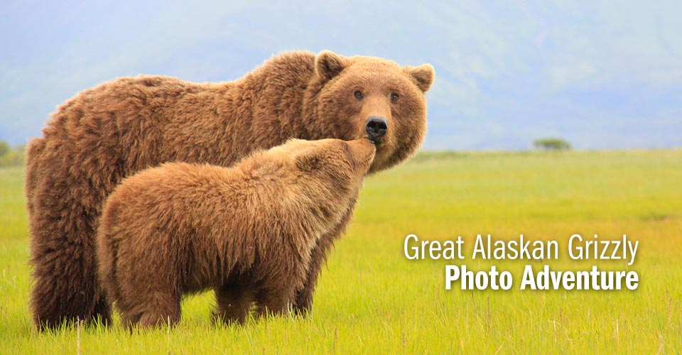 Brown bear mother and cub, Katmai National Park, Alaska, USA