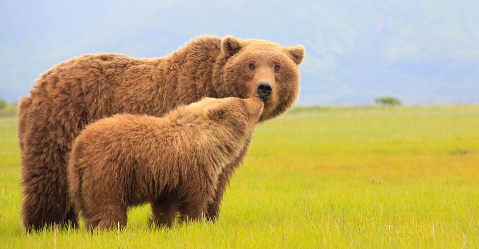 The Great Alaskan Grizzly Photo Adventure