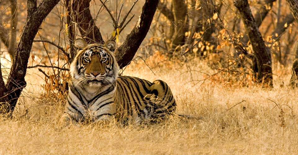 India Photo Tour | Photo Expeditions | Natural Habitat