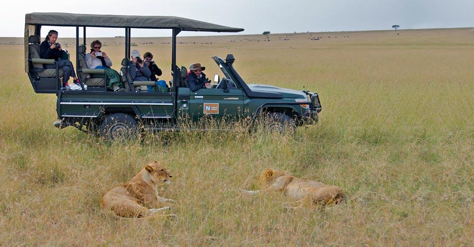 African lion, Maasai Mara National Reserve, Kenya