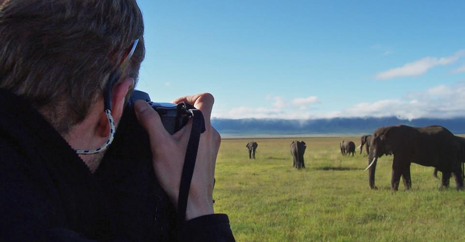 African elephant, Maasai Mara National Reserve, Kenya