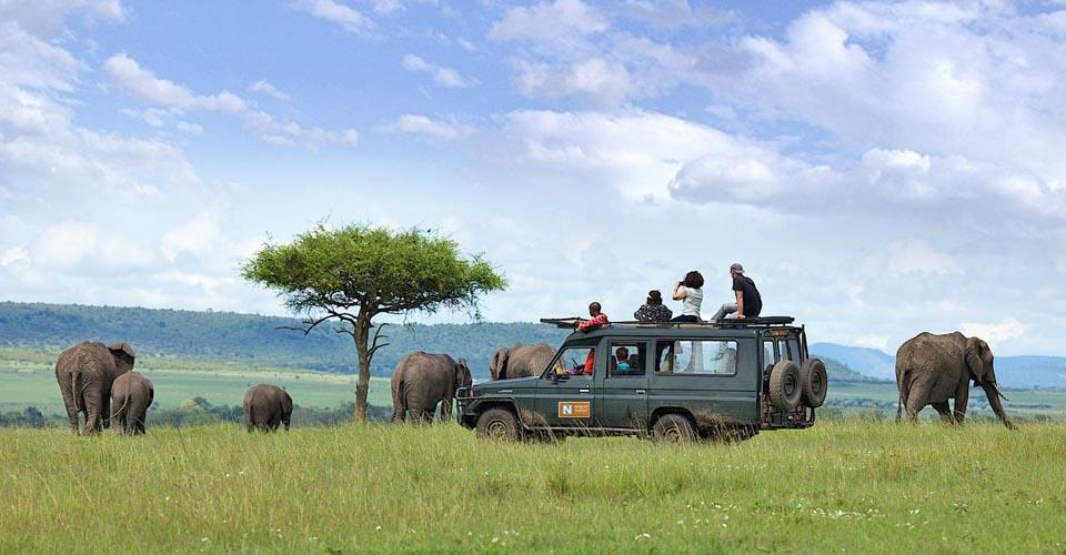 Elephant, Maasai Mara National Reserve, Kenya