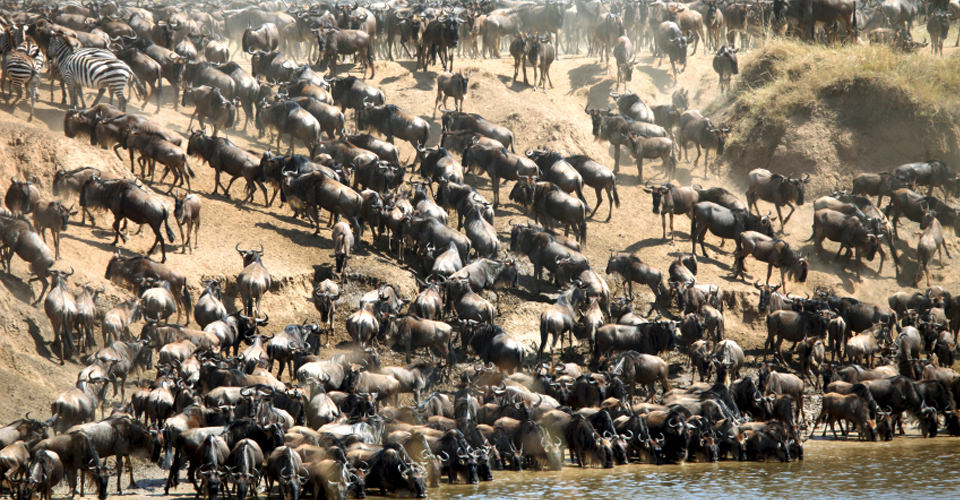 The Great Kenya Migration Safari