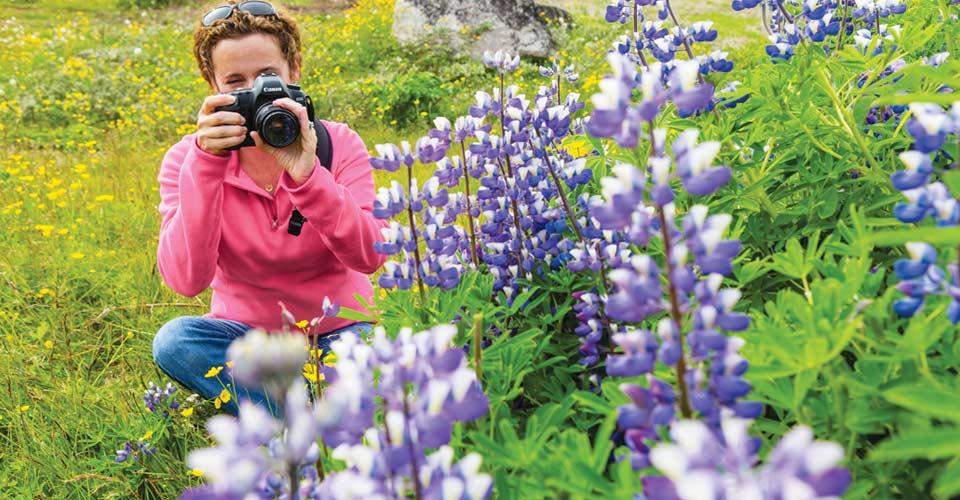 Wildflowers, Qaqortoq, Greenland