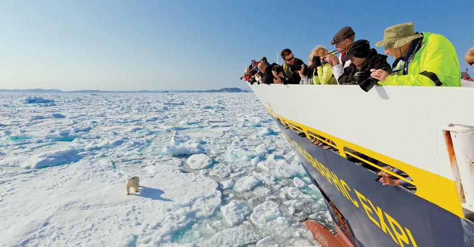Polar bear, Baffin Island, Canada