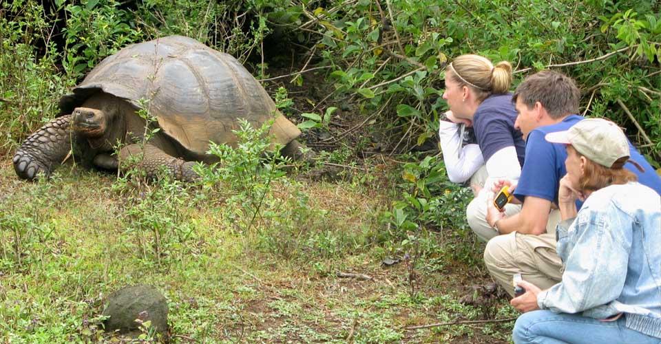 Galapagos tortoise, Santa Cruz, Galapagos Islands, Ecuador