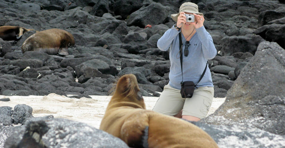 Galapagos sea lions, San Cristobal, Galapagos Islands, Ecuador
