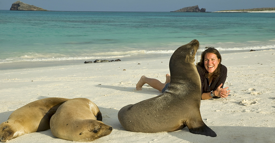 Sea lions, Espanola, Galapagos Islands, Ecuador