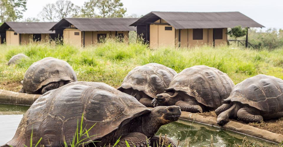 Natural Habitat's Tortoise Camp, Santa Cruz, Galapagos Islands, Ecuador