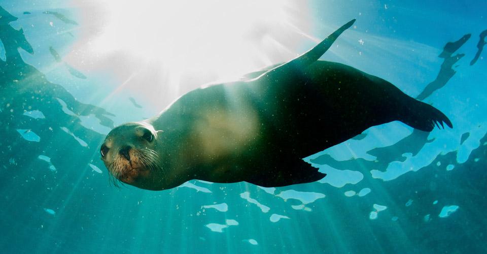 Galapagos sea lion, Galapagos Islands, Ecuador