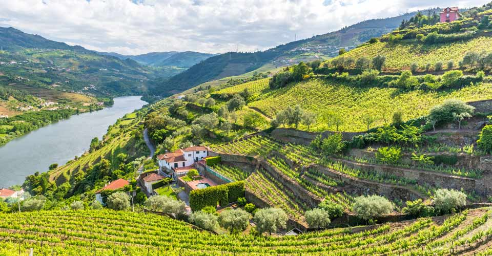 Vineyards, Douro Valley, Portugal