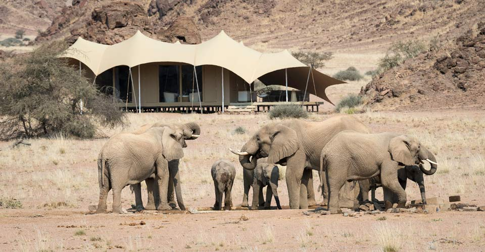 African elephant, Hoanib Skeleton Coast Camp, Namibia