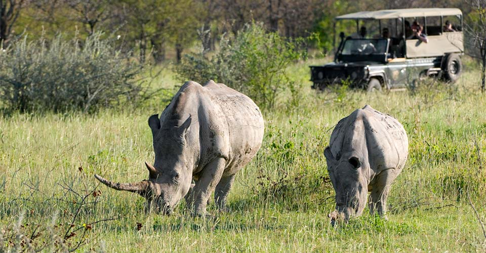 Black rhino, Ongava Private Reserve, Namibia