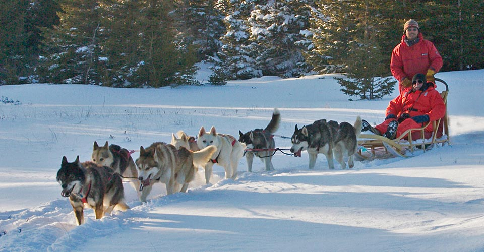 Dog sledding, Churchill, Manitoba, Canada