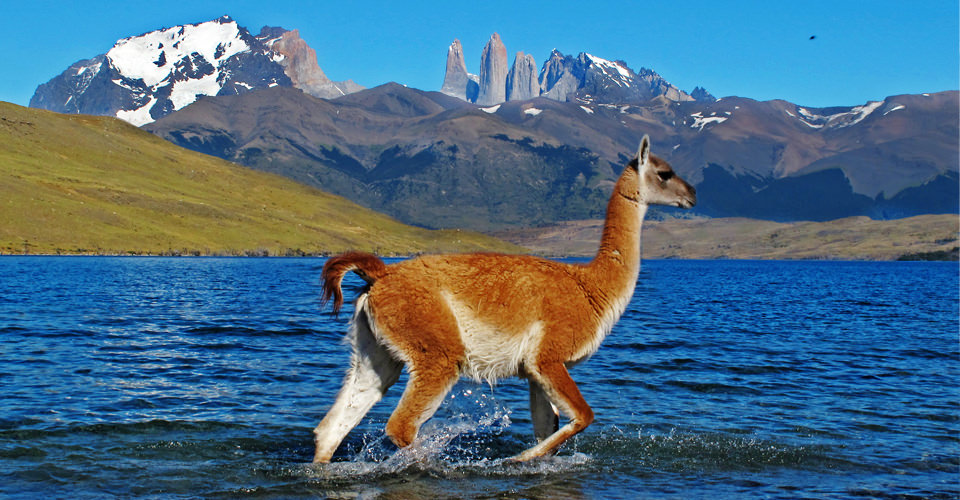 Patagonia South America >> Patagonia Adventures Patagonia Tours Natural Habitat