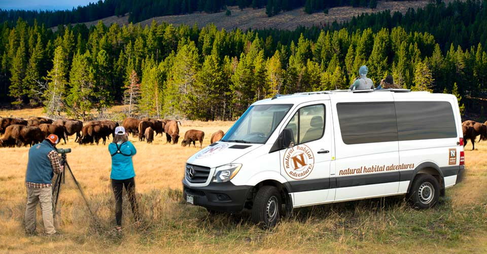 North American Safari Truck, Yellowstone National Park, Wyoming