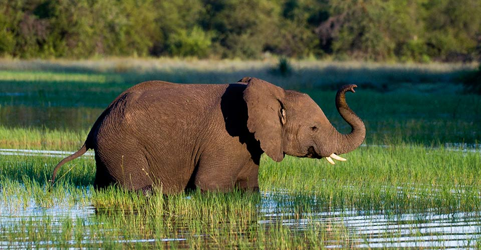 Secluded Botswana Safari