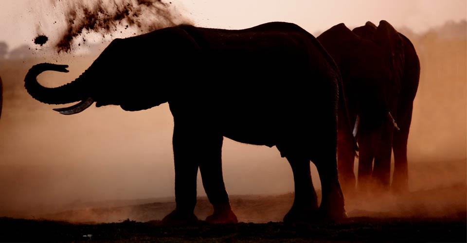 African elephant, Hunda Island, Botswana
