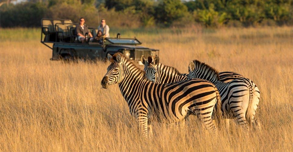 Burchell's Zebra, Hunda Island, Botswana
