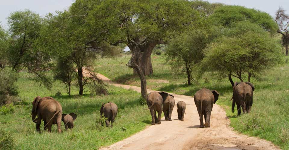 Elephant, Tarangire National Park, Tanzania