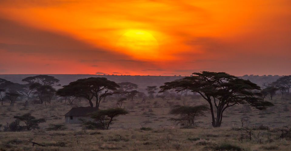 Ehlane Plains, Serengeti National Park, Tanzania