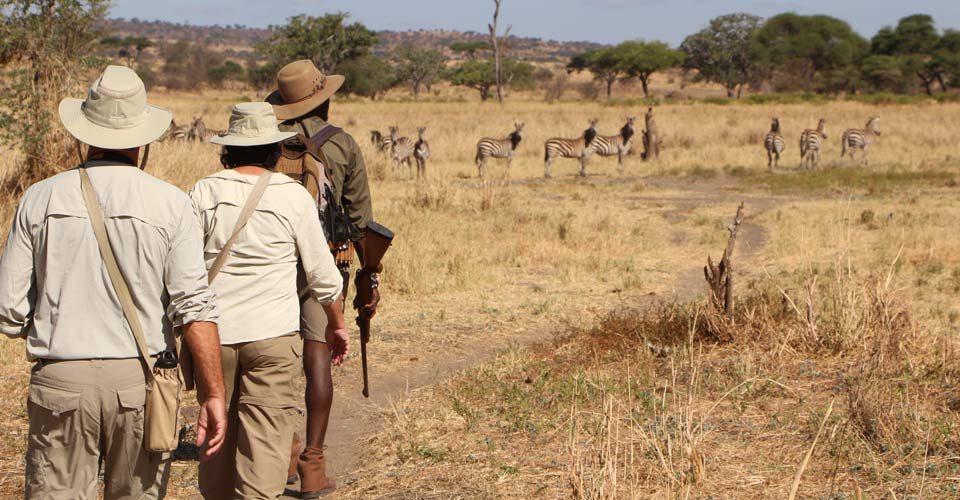 Walking safari, Tarangire National Park, Tanzania