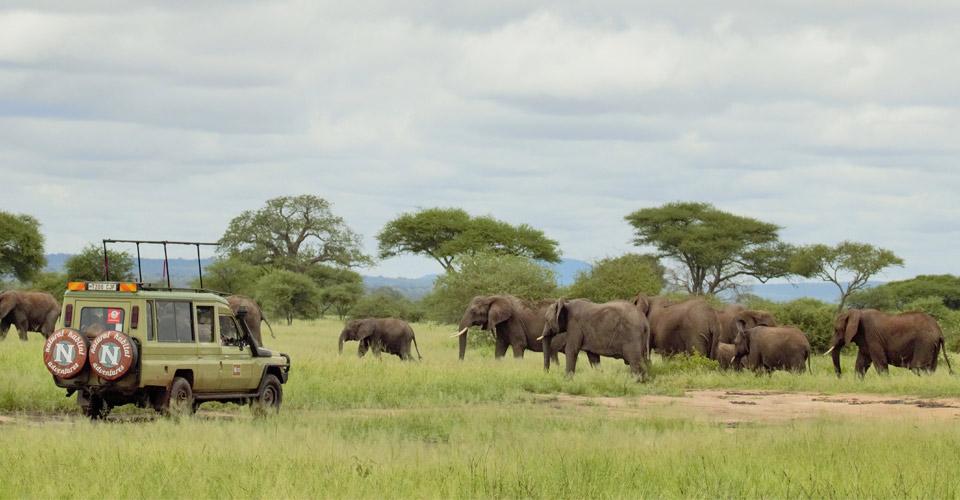Elephant, Tarangire, National Park, Tanzania