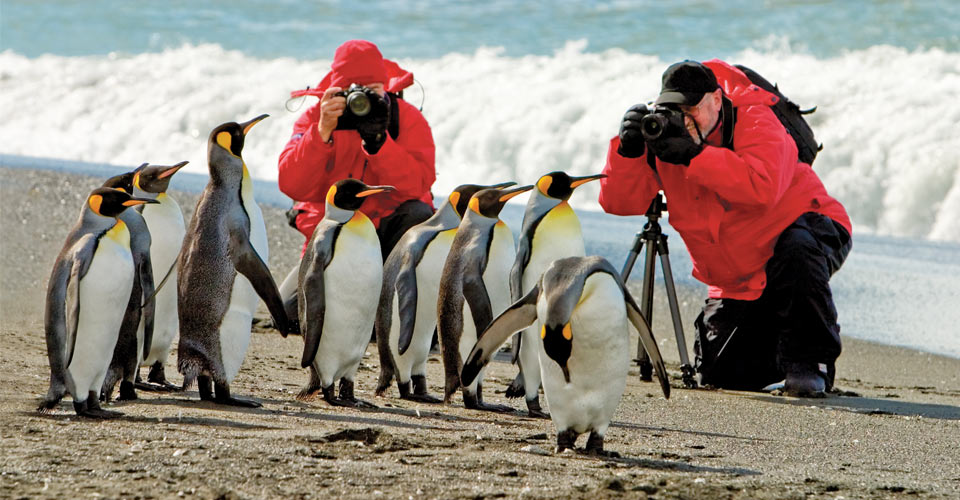 King penguins, photographers, South Georgia