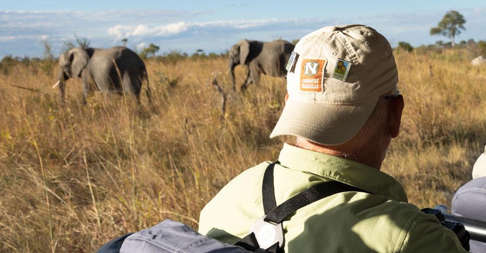 African elephant, Hwange National Park, Zimbabwe